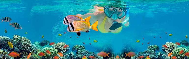 Snorkeling Reef