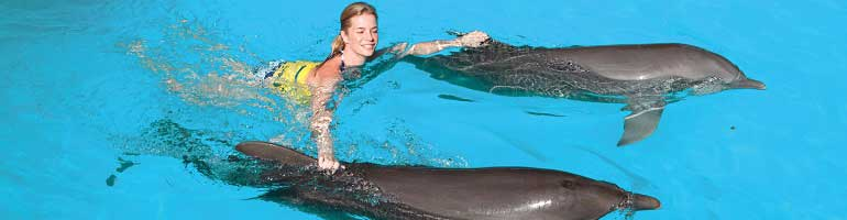 Swim with Dolphins Tour