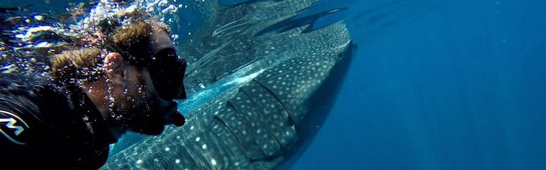 Whale Shark Close Look